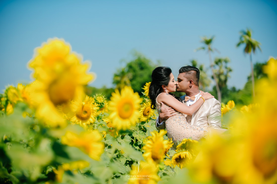 Sunflower Field Pre Wedding in Thailand with Rajan and Sashi